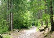 Arezzo: nè soldi nè casa. Una famiglia intera va a vivere nel bosco