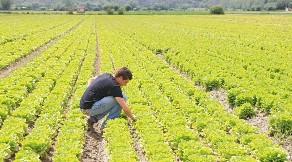 1 miliardo di euro in 3 anni per le imprese agricole del Sud