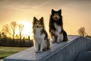 Porte aperte dei bus a cani e gatti in Friuli