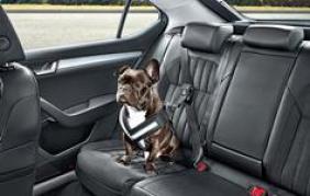 Così il tuo cane viaggia in sicurezza con te