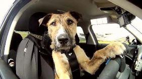 Hai un cane e vuoi fare un viaggio? Le regole per trasportarlo in sicurezza evitando sanzioni