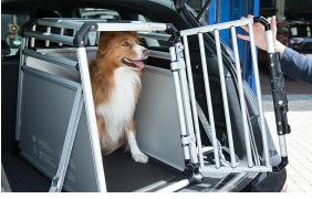 Trasporta il tuo cane in auto in completa sicurezza