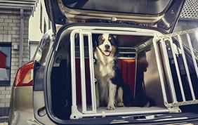 Nuova Ford Focus Wagon: sicurezza per i nostri amici a quattro zampe